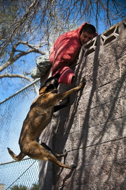 canine training can be easy with these tips - Canine Training Can Be Easy With These Tips