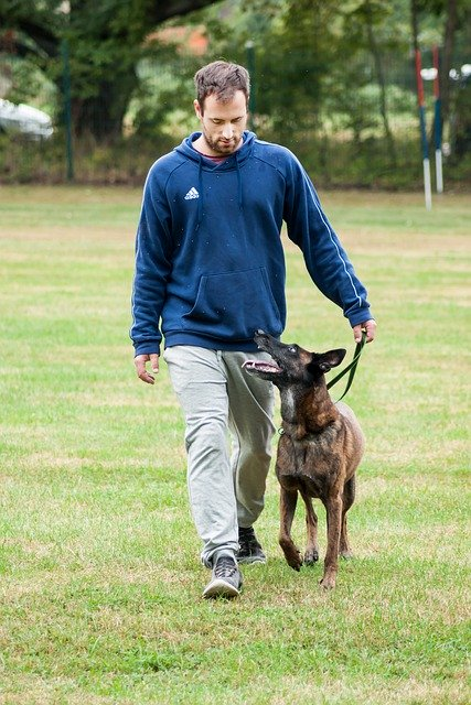 training tips to make a great dog - Training Tips To Make A Great Dog