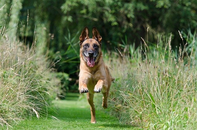train your dog the right way 2 - Train Your Dog The Right Way.