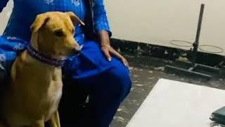 Funny dog training  - Funny dog training 😂😂😂