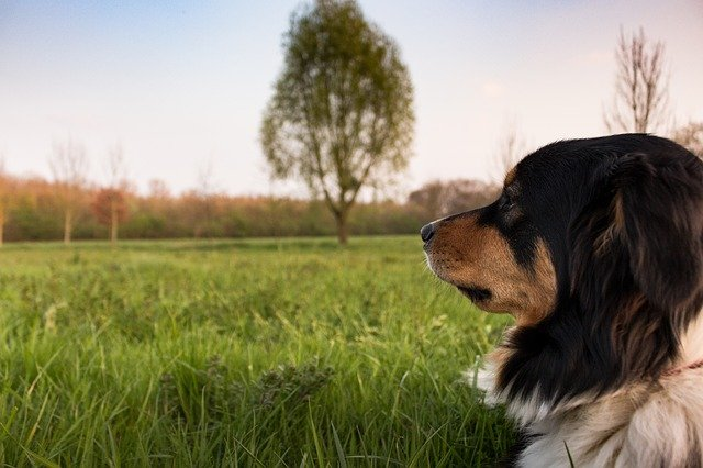the dos and donts with dog training 1 - The Do's And Don'ts With Dog Training