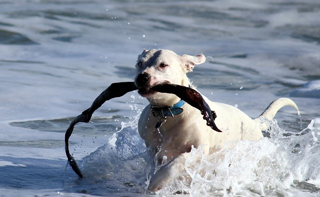 training your dog can be fun for you and him 1 - Training Your Dog Can Be Fun For You And Him