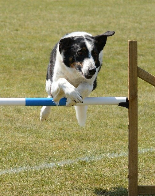 be well educated with these tips on training your dog - Be Well Educated With These Tips On Training Your Dog