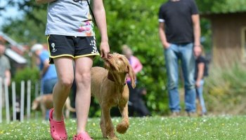 consistent methods get consistent results in dog training - Train Your Dog The Right Way.