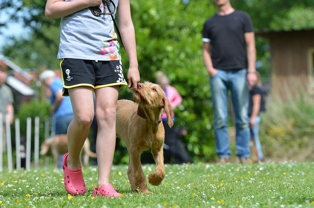 consistent methods get consistent results in dog training - Consistent Methods Get Consistent Results In Dog Training