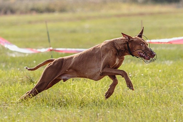 maximize the time spent training your dog - Maximize The Time Spent Training Your Dog