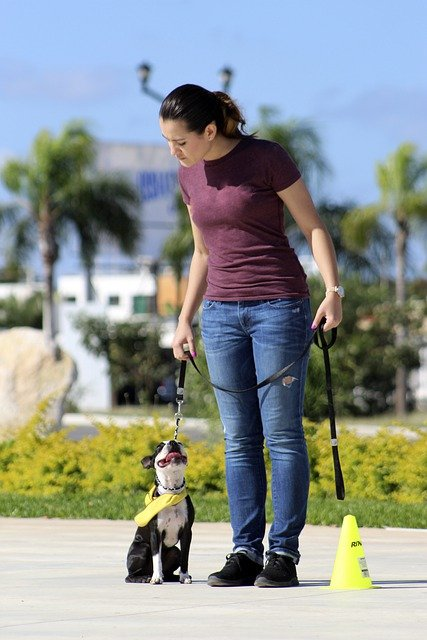 the dos and donts of proper dog training 1 - The Do's And Don'ts Of Proper Dog Training