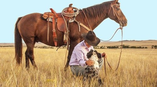 how to get a well trained dog - How To Get A Well Trained Dog