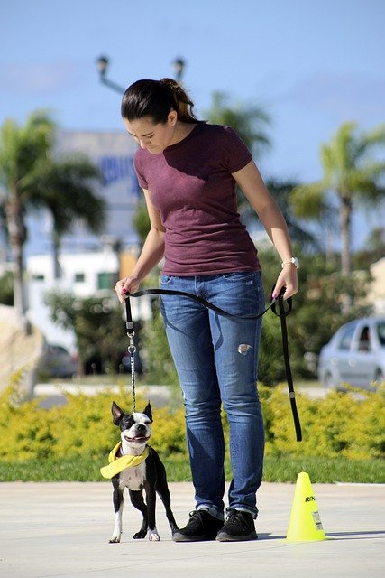 learn the best method of training your dog - Learn The Best Method Of Training Your Dog