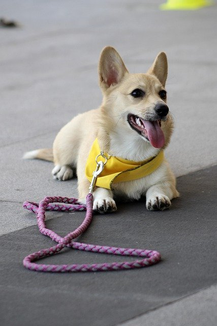 puppy training tips that can work for everyone 2 - Puppy Training Tips That Can Work For Everyone!