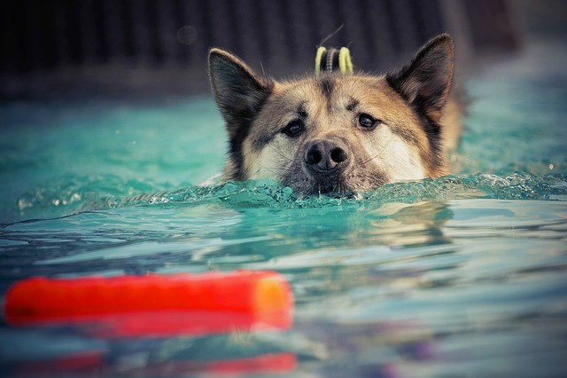 try out these awesome training your dog tips - Try Out These Awesome Training Your Dog Tips!