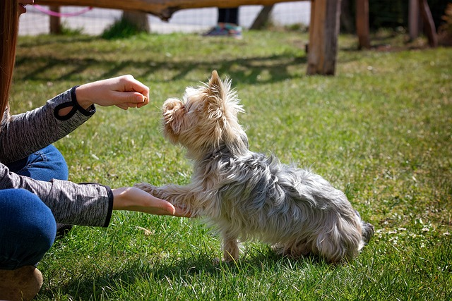 how to break bad habits in your canine with training 1 - How To Break Bad Habits In Your Canine With Training