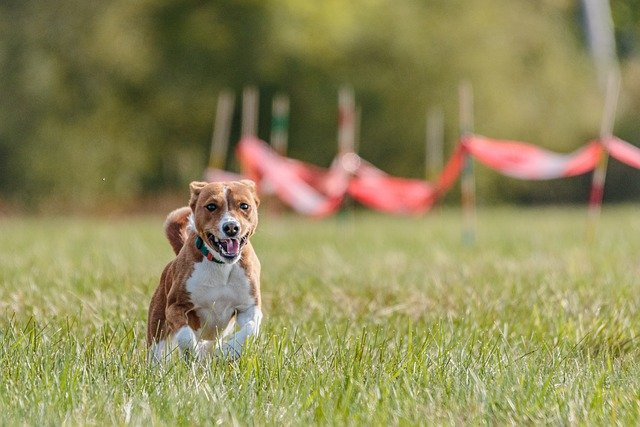tips and tricks to boost your canine training program - Tips And Tricks To Boost Your Canine Training Program