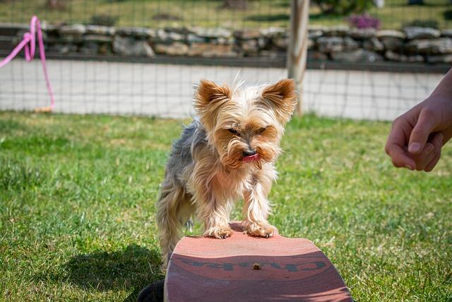 useful advice for training your dog correctly 1 - Useful Advice For Training Your Dog Correctly