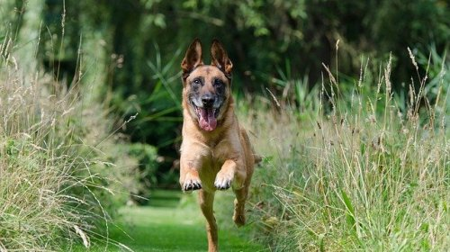 effective strategies to training your dog - Effective Strategies To Training Your Dog