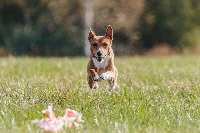 get your dog trained today with these simple tips - Get Your Dog Trained Today With These Simple Tips