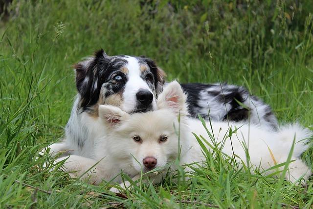 teach your dog to behave - Teach Your Dog To Behave!