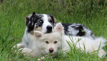teach your dog to behave - How To Have An Obedient And Happy Dog