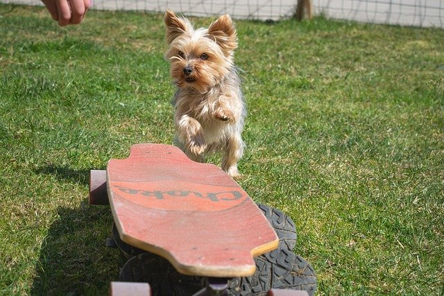 train your dog the right way - Train Your Dog The Right Way.