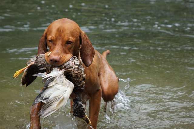 training help for you and your dog - Training Help For You And Your Dog