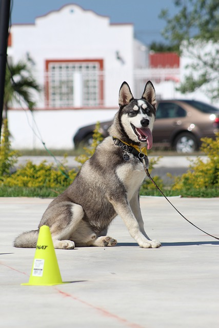 canine training will bring you closer to your dog 1 - Canine Training Will Bring You Closer To Your Dog