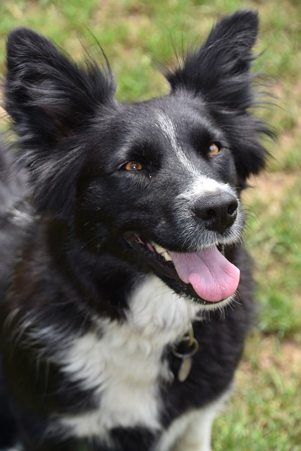 check out these simple canine training ideas - Check Out These Simple Canine Training Ideas