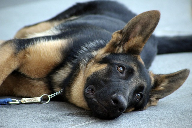 the basic commands of excellent training your dog - The Basic Commands Of Excellent Training Your Dog
