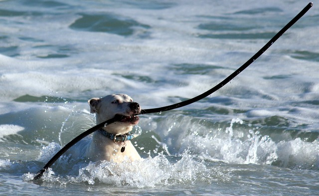 a great guide on how to train your dog 1 - A Great Guide On How To Train Your Dog