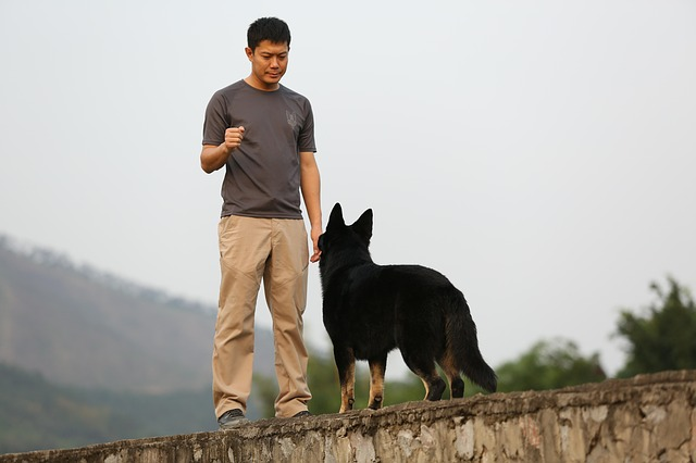 training your dog with a few key tips - Training Your Dog With A Few Key Tips