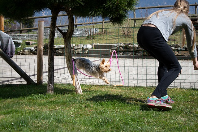 learn how to train your dog from the pros - Learn How To Train Your Dog From The Pros