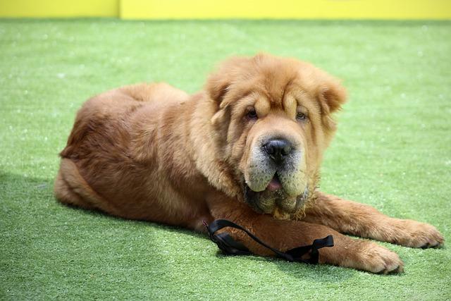 simple tips for a welltrained canine companion - Simple Tips For A Well-Trained Canine Companion