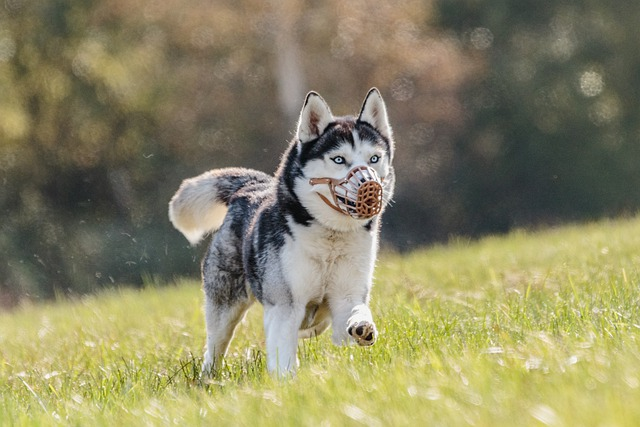 simple tips for effective dog obedience training - Simple Tips For Effective Dog Obedience Training