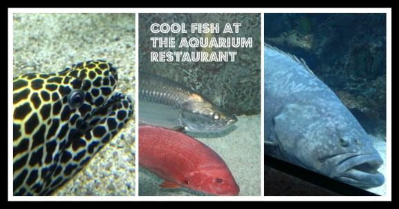 aquarium_fish