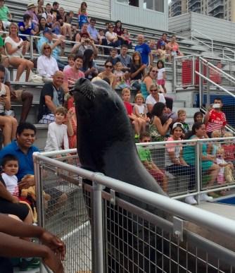 New York Aquarium, Sea Lion Show