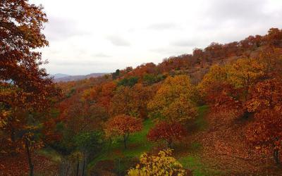 Descubre otro otoño en El Bosque de Cobre
