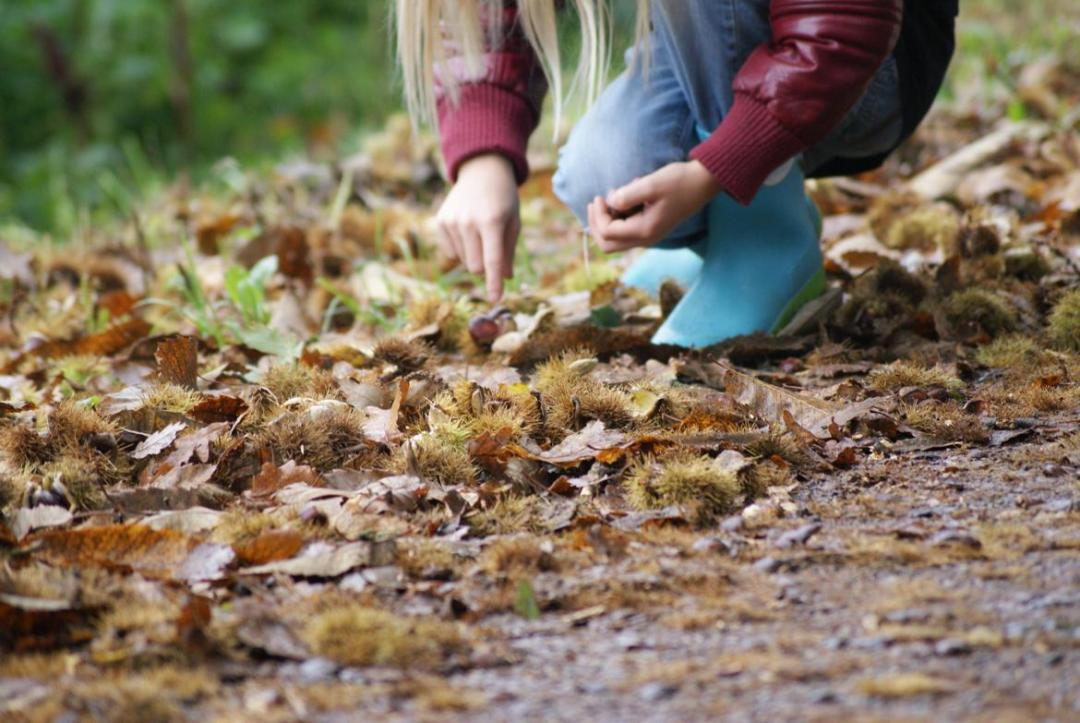 Niña cogiendo castañas, Bosque de Cobre, Valle del Genal, Malaga, Familysol