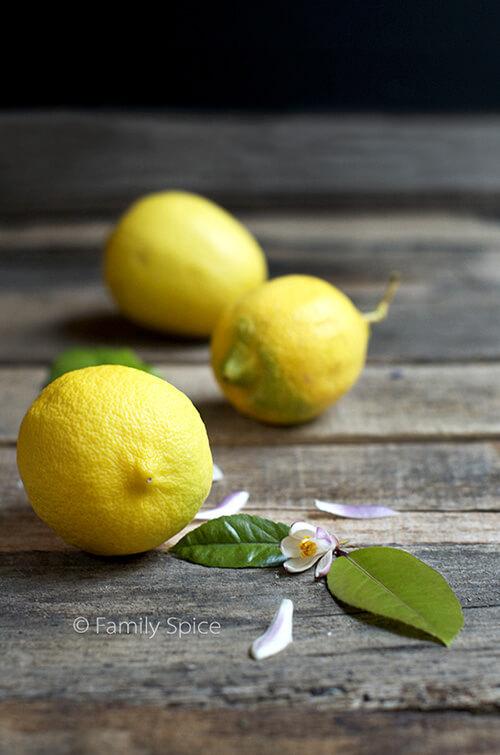 Lemons and blossoms by FamilySpice.com