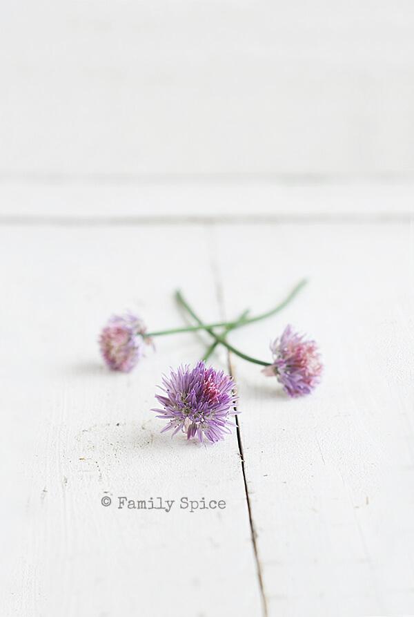 Chive Blossoms for Portobello and Asparagus Quiche by FamilySpice.com