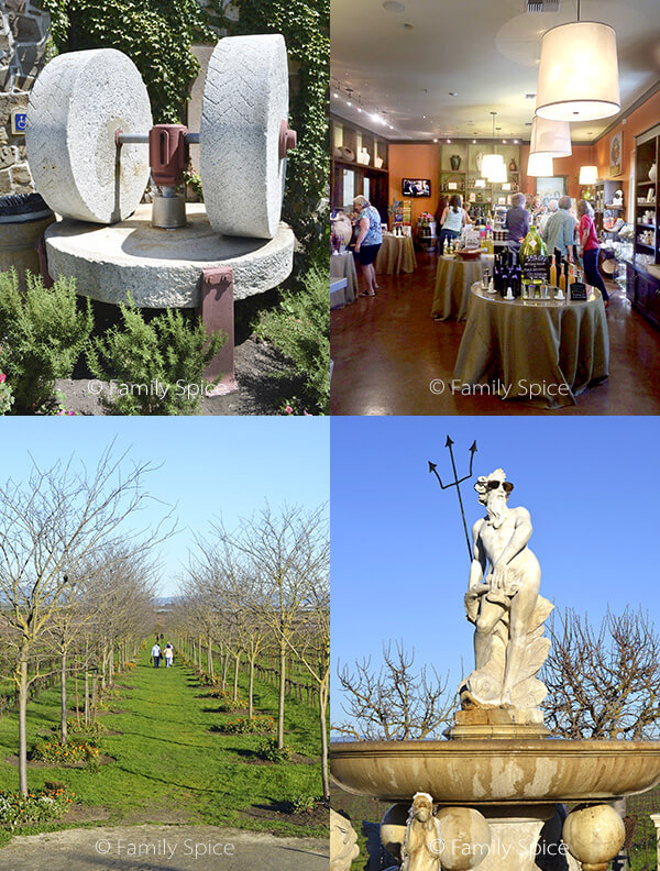 Things to Do in Napa with Kids: The Olive Press by FamilySpice.com