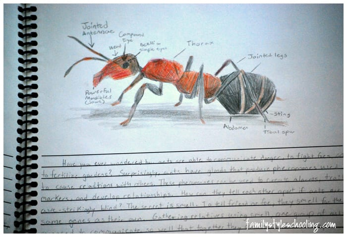 diagram of an ant sketch notebook challenge a