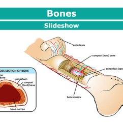 Kids Skeletal System Diagram Remote Start Wiring Diagrams Your Bones For Kidshealth