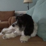 Dog care guide for pet sitters