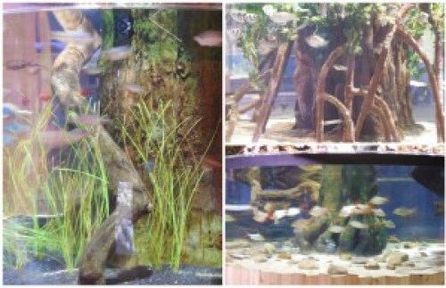 Some of the fish exhibits. I especially loved how they were divided up by region.