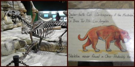Skeleton of a sabertooth tiger found in the La Brea Tar Pits.
