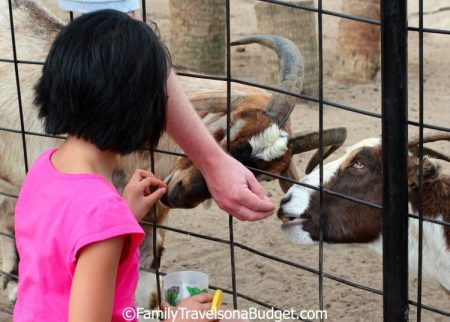 """Feeding the residents of the Alabama Gulf Coast Zoo, aka the """"Little Zoo that Could."""""""