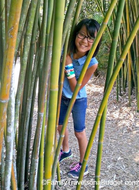 Jacksonville Getaway Zoo Bamboo