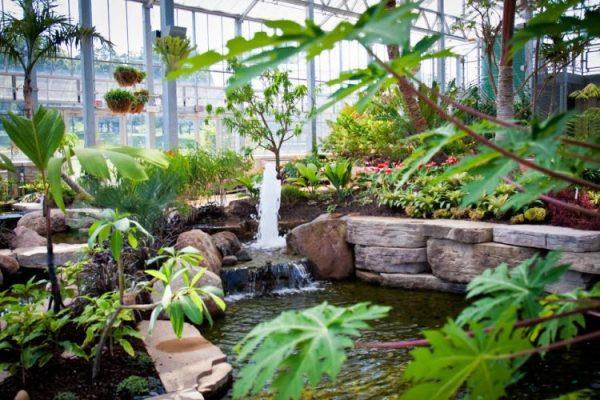 Nicholas Conservatory & Gardens koi pond