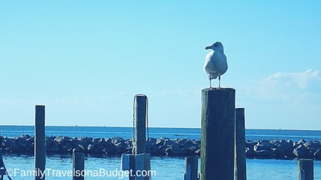 Outer Banks Vacation, seabird