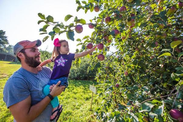 apple-orchards-north-carolina