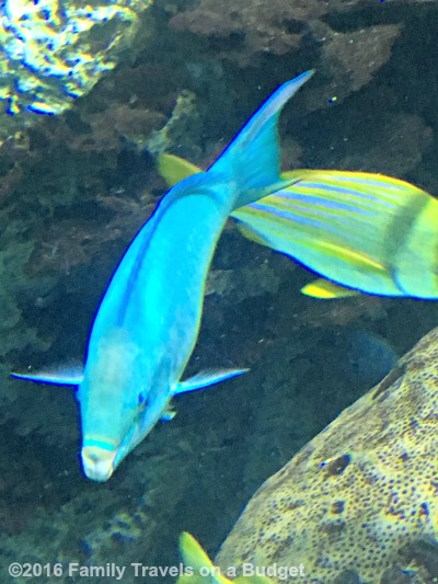 Baltimore 39 S National Aquarium Family Travels On A Budget